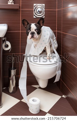 French bulldog sitting on toilet at home - stock photo