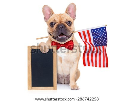 french bulldog  waving a flag of usa on independence day on 4th  of july , isolated on white background,  holding a blank and empty blackboard