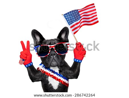french bulldog  waving a flag of usa on independence day on 4th  of july , isolated on white background,  victory or peace fingers