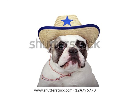 French Bulldog wearing a Sheriff Hat.  Isolated on a white background.
