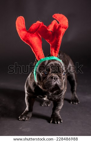 french bulldog wearing antler for christmas - stock photo