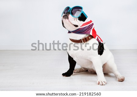 French bulldog with sunglasses in room - stock photo