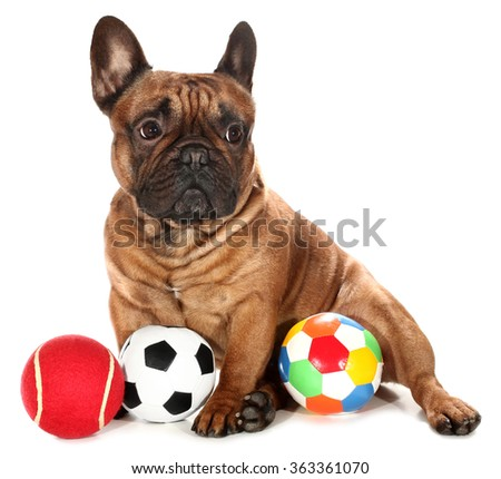 French Bulldog with three balls dog toys
