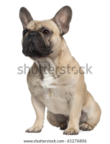 French Bulldog, 2 Years old, sitting in front of white background