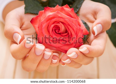 French manicure and red rose - stock photo