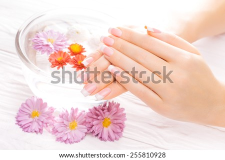 french manicure with colorful chrysanthemum - stock photo