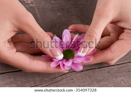 French manicure with pink chrysanthemum on the old vintage wooden background. Beautiful design of manicure.
