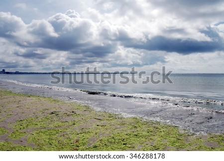 French sea shore with weed in stormy weather - stock photo