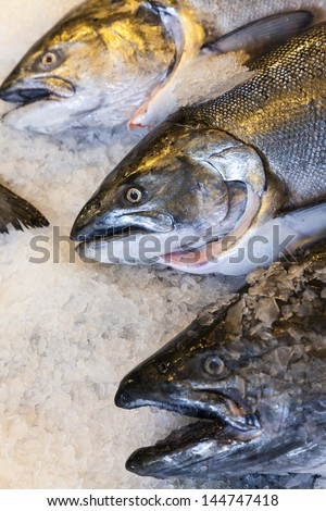 King salmon stock images royalty free images vectors for King fish market