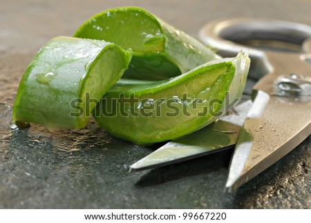 Fresh aloe vera cuttings with scissors on slate cutting board.  Macro with extremely shallow dof. - stock photo