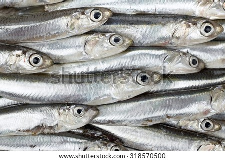 Fresh anchovies prepared seafood background texture or pattern. Raw food.