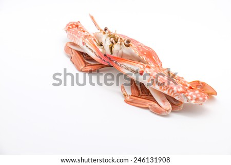 Fresh and delicious steamed or boiled blue crab for seafood on white background - stock photo