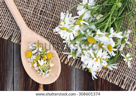 Fresh and dried camomile on sacking on old wooden background - stock photo
