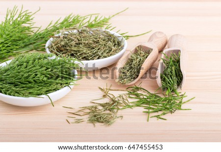 Fresh and dried field horsetail / field horsetail / medicinal herb