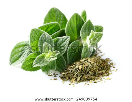 Fresh and dried oregano spices - stock photo