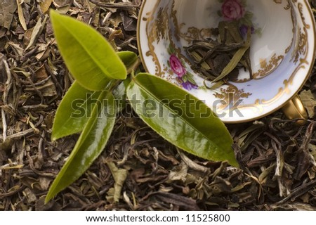 fresh and dried tea
