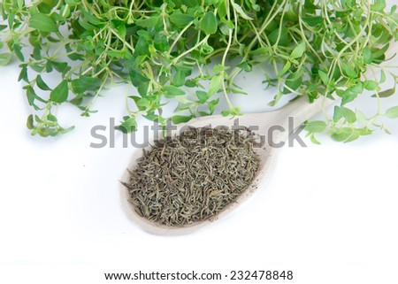 fresh and dried thyme on white background - stock photo