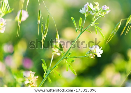 Fresh and grass flowers in green summer field