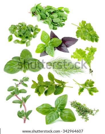 Fresh and green herb set including mint, sliced spring onions, parsley, green and red basil, dill, lettuce, melissa and marjoram isolated on white background