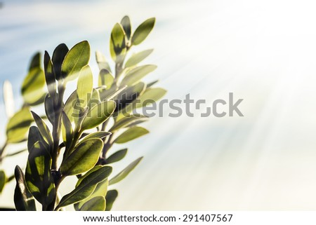 fresh and green leaves covered in due drops, Sun beams and green leaves in front of blue background