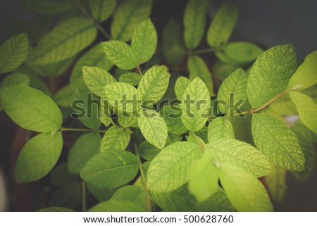 Fresh And Green Leaves On Dark Background