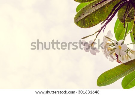 fresh and green leaves on green background, Vintage picture - stock photo