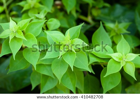 fresh and green leaves,  soft focus bur - stock photo