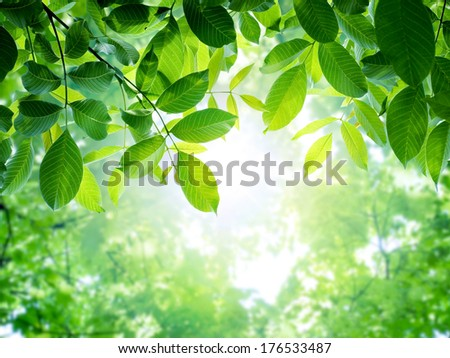 Fresh and green leaves. Spring background.