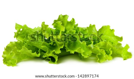Fresh and green lettuce on white background, food concept - stock photo
