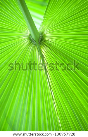 fresh and green palm leaves background - stock photo