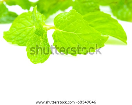 Fresh and green peppermint
