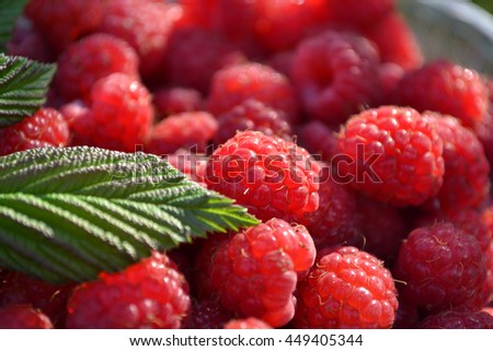 Fresh and ripe red raspberries.