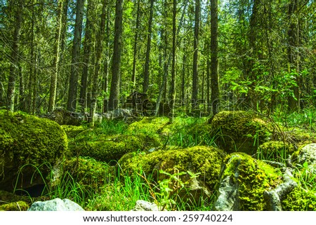 Fresh and rotten stump natural background: tree trunk covered with green moss lies in a grass in summer forest