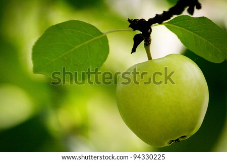 Fresh and tasty green apple - stock photo
