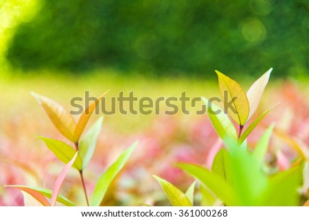 fresh and vibrant color background of young sprout   multicolor leaf with beautiful  bokeh . - stock photo