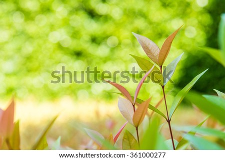 fresh and vibrant color background of young sprout   multicolor leaf with beautiful  bokeh .