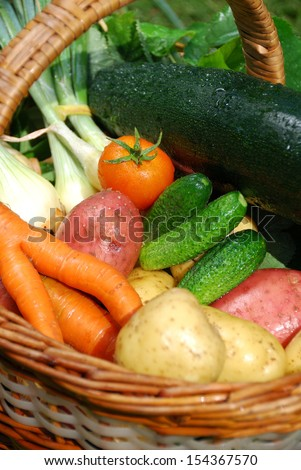 fresh and wet vegetable basket of organic farms - stock photo