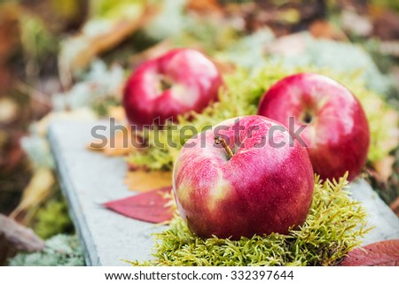 fresh apples on the moss in autumn forest - stock photo