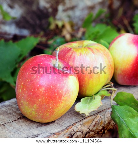 Fresh apples on the wooden bench - stock photo