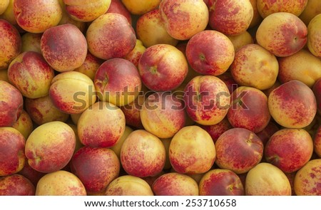 Fresh apricots for eating and making juice and jam - stock photo