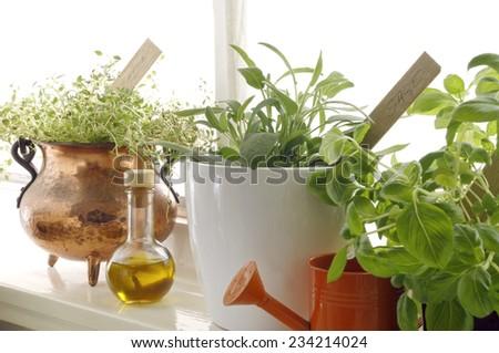 Fresh aromatic herbs in pots on window - stock photo