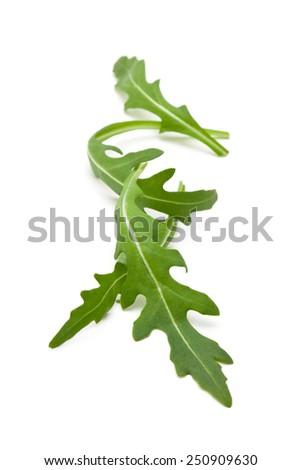 Fresh arugula leaves. Isolated on white background. - stock photo