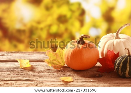 Fresh assorted pumpkin and squash in an autumn garden with colorful golden foliage on the trees standing on an old wooden table with red and yellow fall leaves, with copyspace - stock photo