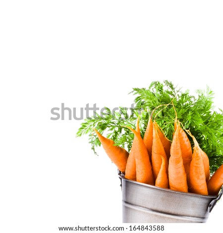 fresh baby carrots in an iron beam of the bucket with fresh herbs, isolated on white background - stock photo