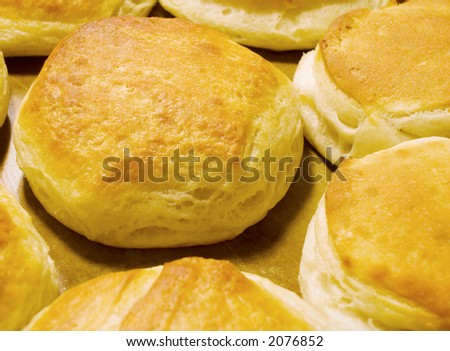 Fresh baked buttermilk biscuits, hot out of the oven, on the pan.
