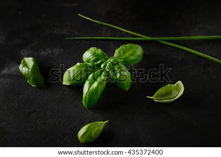 fresh basil and chives on a dark rustic background - stock photo