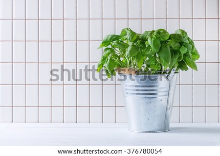 Fresh Basil branch in metal pot over kitchen table with white tiled wall at background. - stock photo