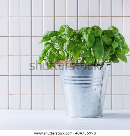 Fresh Basil branch in metal pot over kitchen table with white tiled wall at background. Square image - stock photo