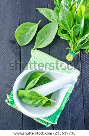 fresh basil leaf - stock photo