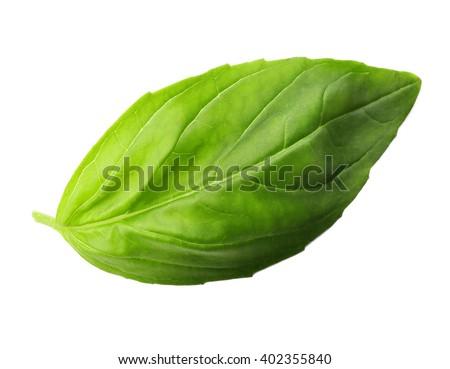 Fresh basil leaf isolated on white - stock photo